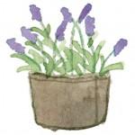 植木鉢の花
